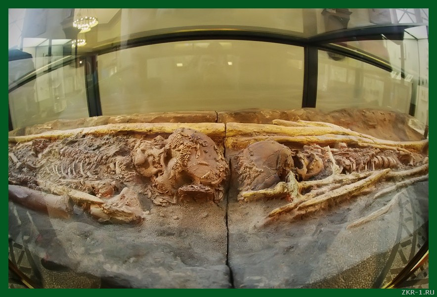 Двойное погребение на стоянке Сунгирь