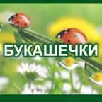 29 Bukashechki