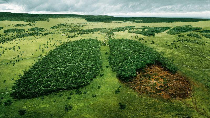 les ekologiya derevya priroda 2
